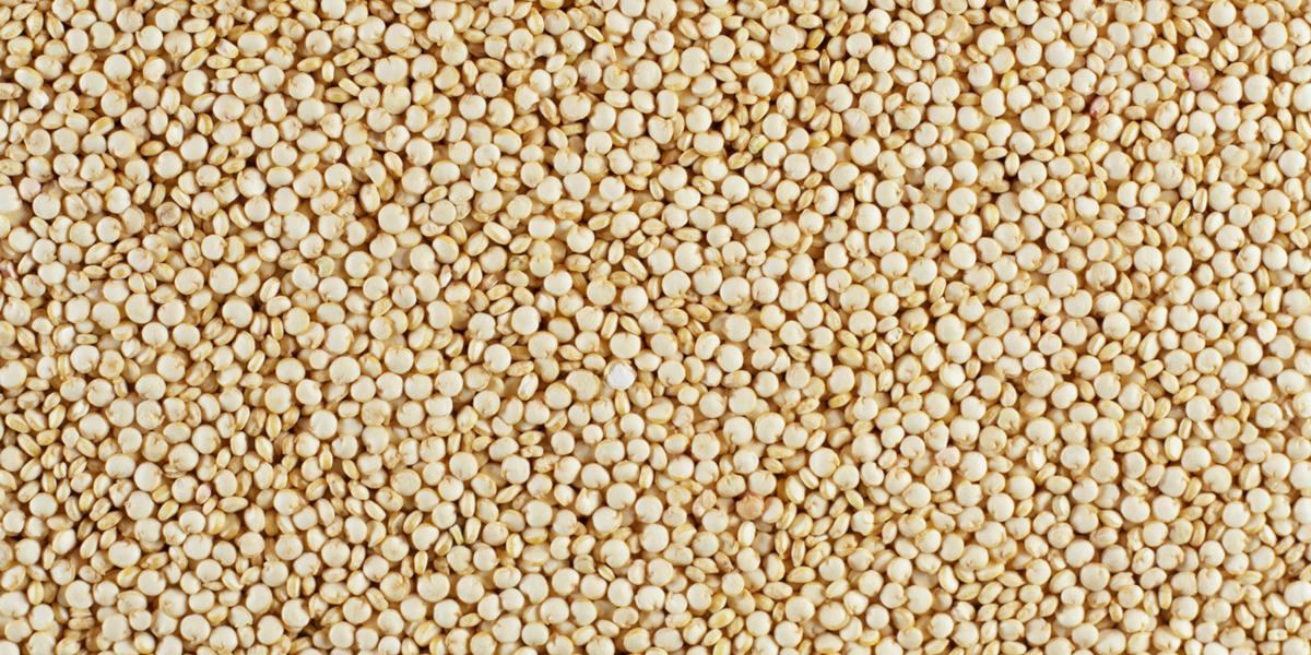 Le quinoa d'Anjou