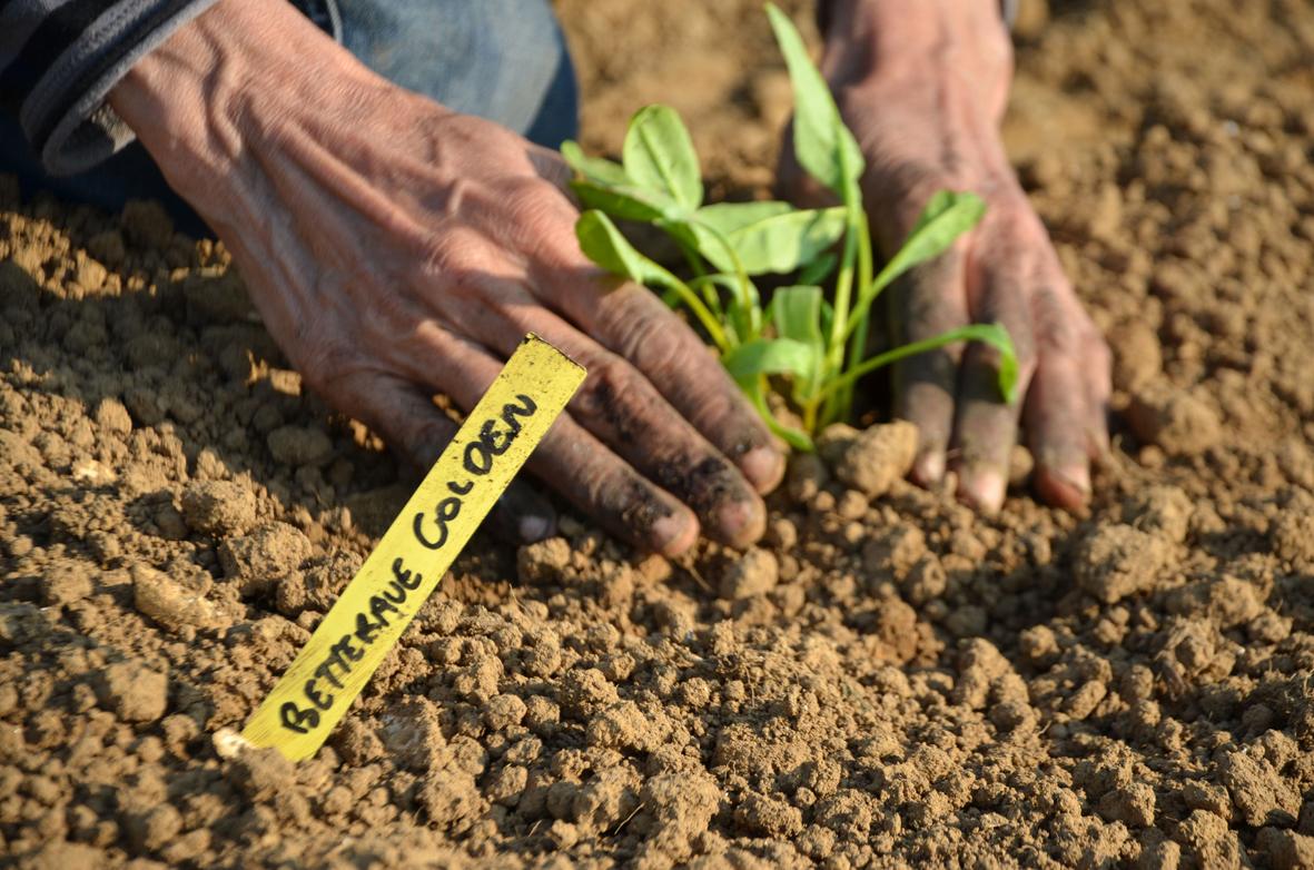 Plantation à main...