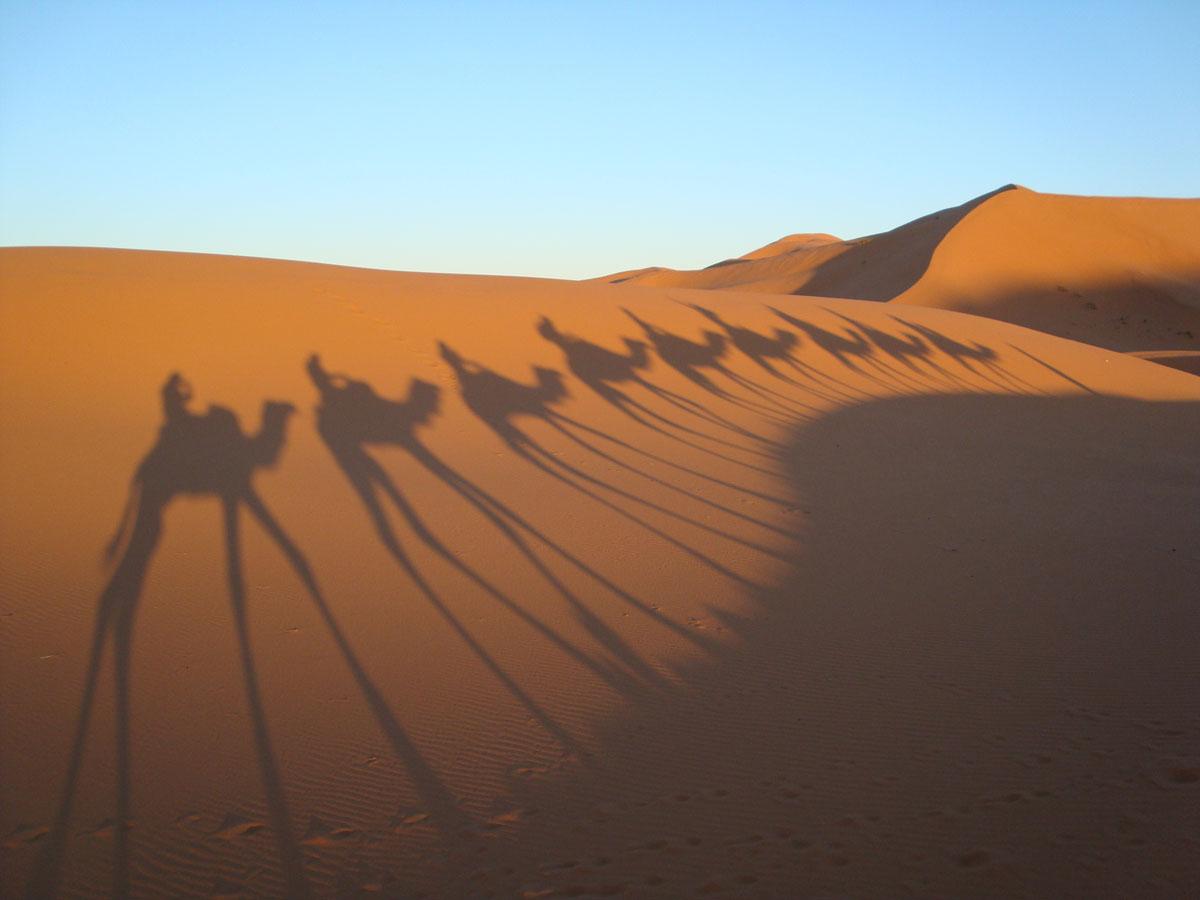 chameau_dromadaire_desert_sahara_maroc_dune