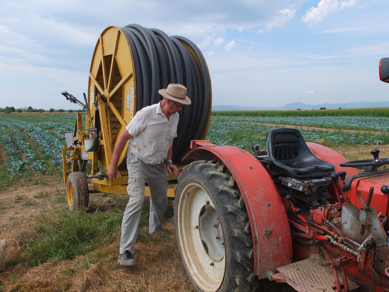 Arsène observant ses choux. Selon les Dernières nouvelles d'Alsace, les producteurs de choucroute alsaciens redoutent une baisse de 25% de la production cette année. Les conséquences « d'un printemps très pluvieux et d'un mois de mai froid ».