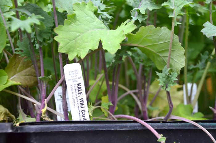 Les ventes de kale aux Etats-Unis : + 40% en 2012.