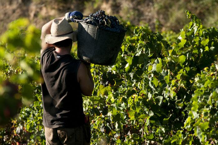 En France, la filière vin compte plus de250000emplois directs.