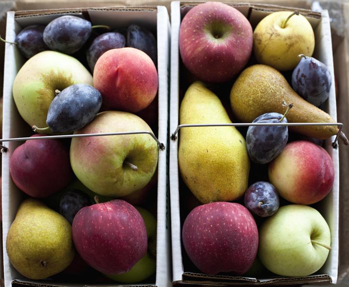 La pomme fait mûrir tous les fruits de son entourage.