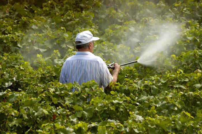 1/5 des pesticides utilisés en France servent à traiter la vigne.
