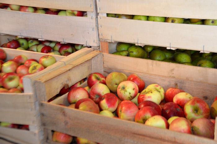 Dans le hangar, les pommes arrivent le jeudi matin alors que carottes et poireaux sont déposés le jeudi soir. Quant aux salades, elles ne sont cueillies que le vendredi matin, pour garantir de l'ultra frais.
