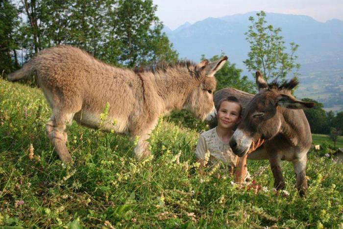 Les ânes de l'exploitation de XX, labellisée AB et Nature vivent sur les hauteurs de Faucigny, village alpin situé à 650 m d'altitude, en Haute-Savoie.