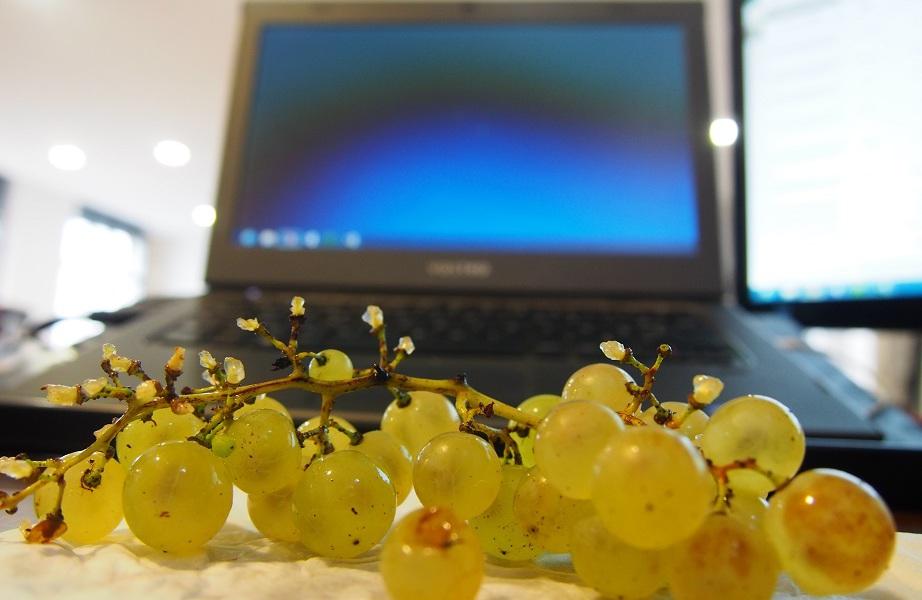 La cure de raisin en entreprise