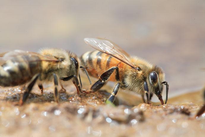 Bee-Hives-Honeybee01
