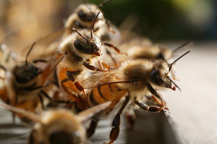 Travail coopératif pour réchauffer la ruche.