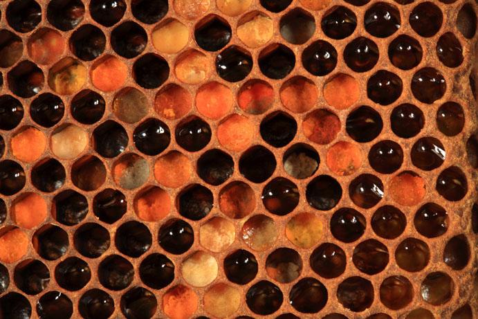 Le menu de l'hiver ? Du miel et encore du miel.