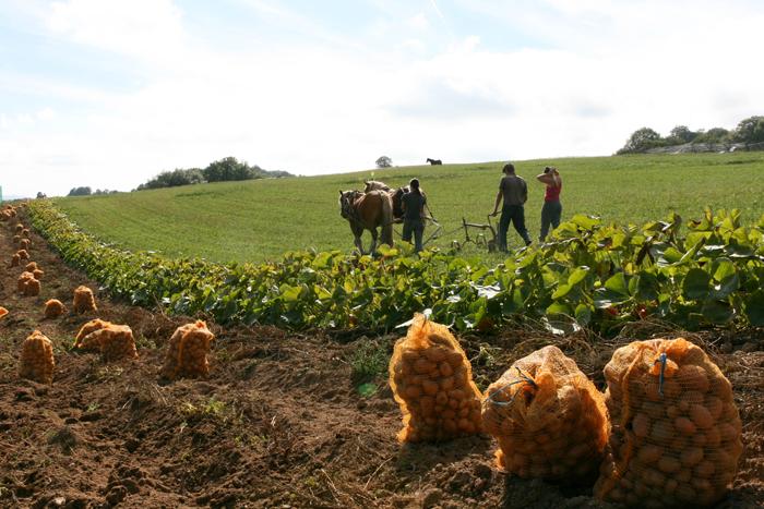 La récolte des pommes de terre ou comment impressionner son voisin sans engin.
