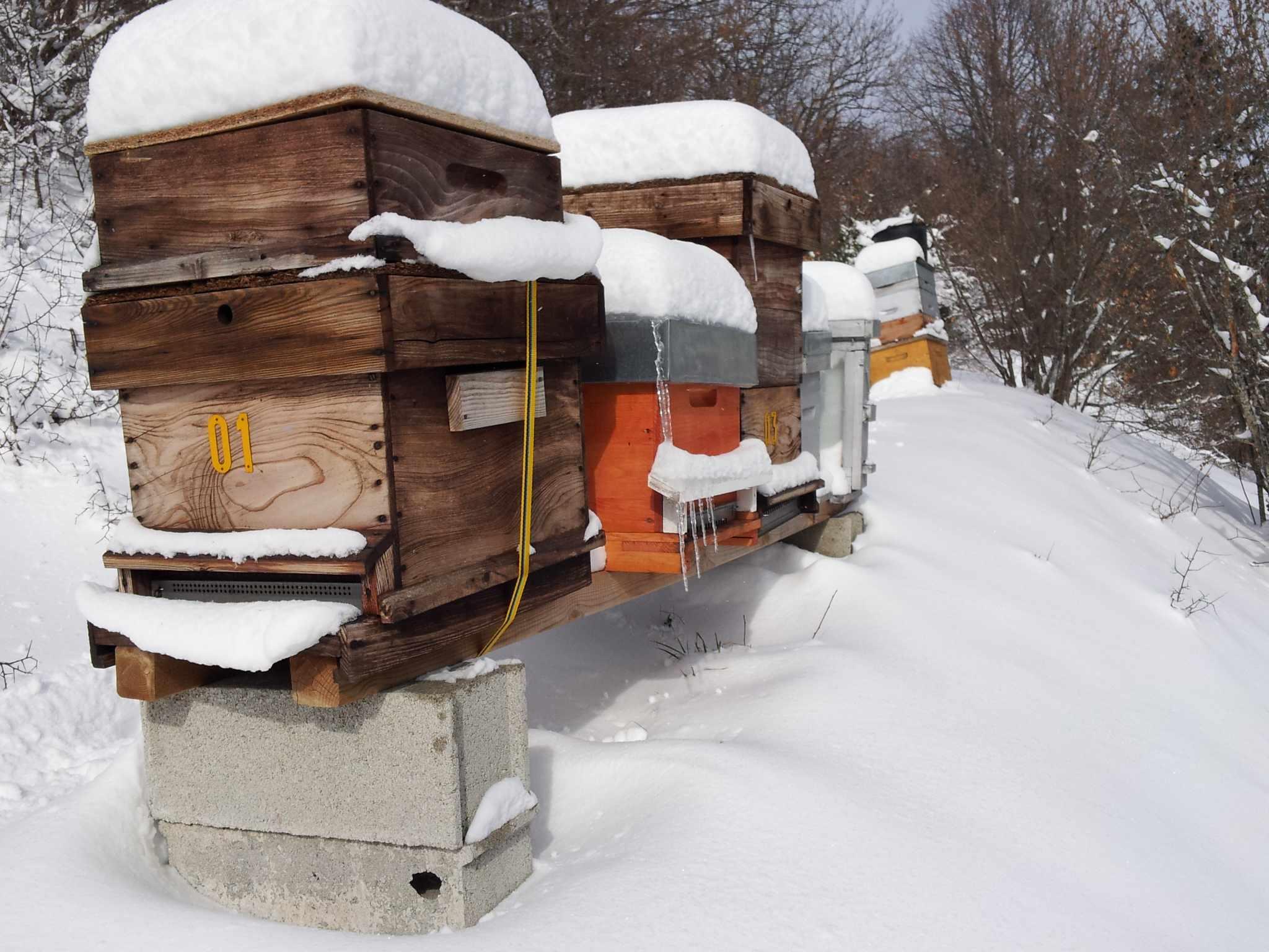 l 39 hiver sale temps pour les abeilles oui le magazine de la ruche qui dit oui. Black Bedroom Furniture Sets. Home Design Ideas
