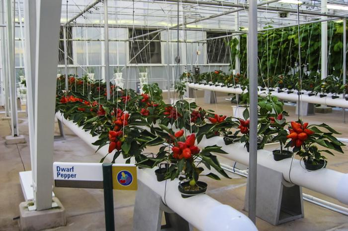 En hydroponie, les plantes doivent être surveillées en permanence au niveau de leur température, de la lumière, de leur pH et de leur teneur en sodium. Ambiance CHU!