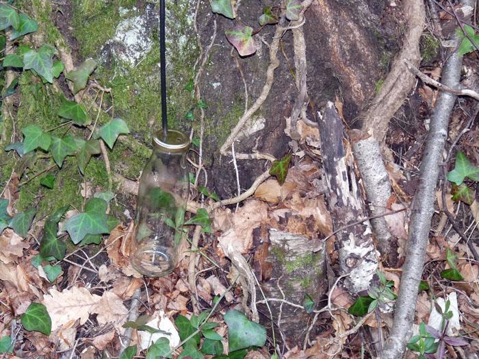 Un petit trou dans l'arbre et le nectar s'écoule tout doucement.