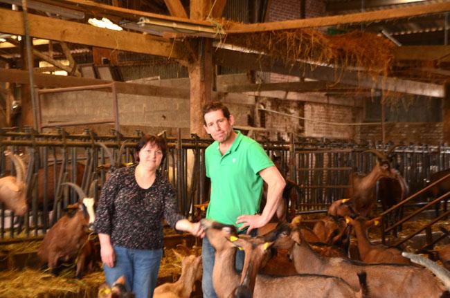 Dans notre village fleuri, au début c'était dur de faire accepter nos chèvres.