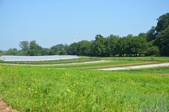 Chacun dispose d'un demi-hectare de terres pour se lancer.