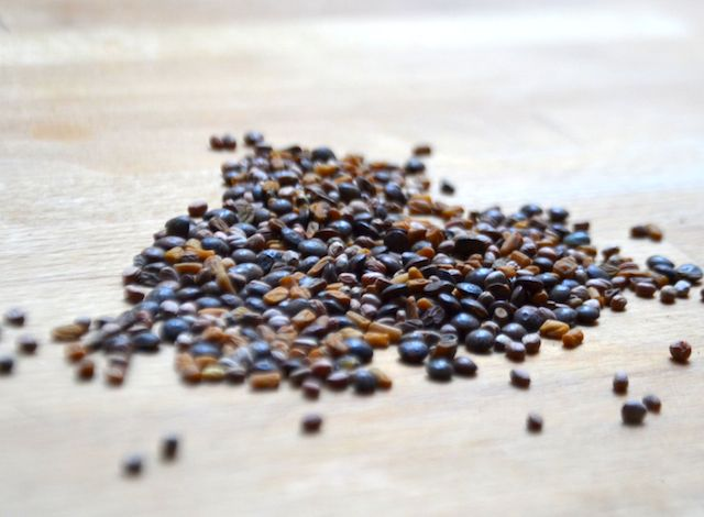 Dire que des petites graines comme ça, une fois germées peuvent être desupercarburants pour notre corps.