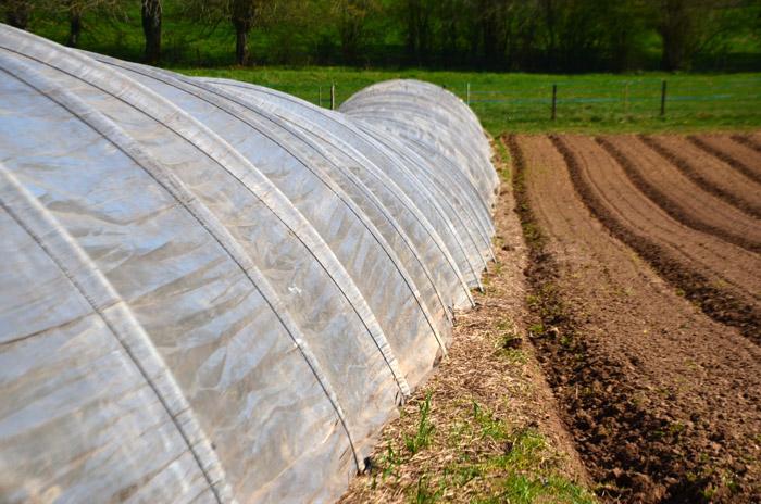 Terres et tunnels sont partagés. Une seule contrainte : produire sans produit chimique. Le Germoir ne promeut que l'agriculture biologique.