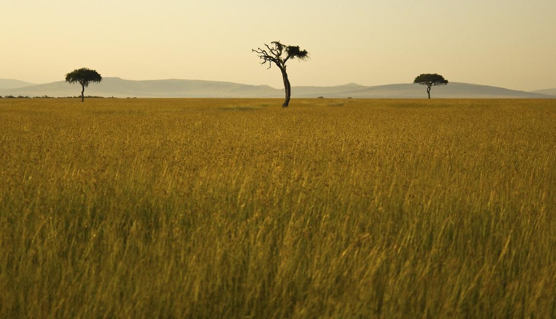 Le Massaï Mara (Kenya)
