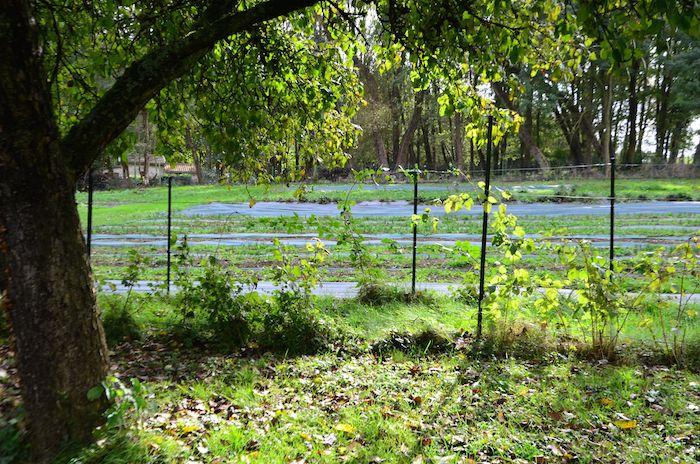Le champ de Béatrice, 3000 m2.