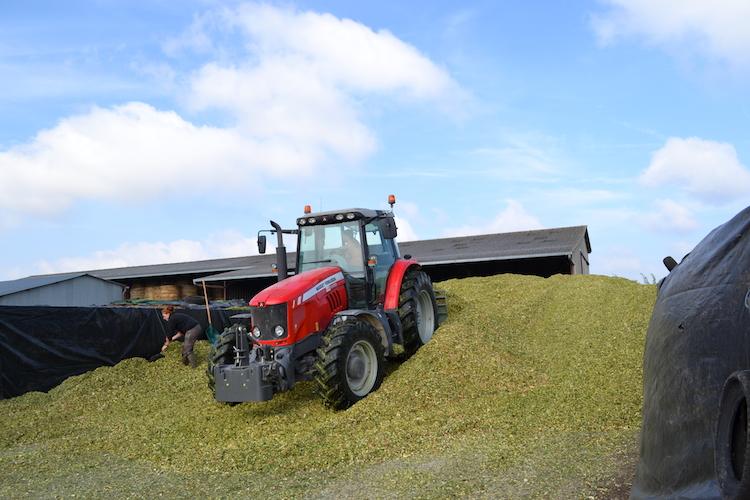 (6) Jour de chantier aujourd'hui ! Récolte du mais pour en faire de l'ensilage, les vaches en raffolent ! C'est papa qui s'occupe de le tasser pour que ça fermente bien....