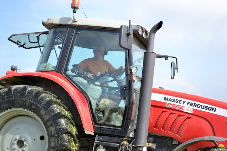 (9) toujours avec Aztec,notre fox, qui demande à chaque fois de monter dans les tracteurs....on ne sait pas trop pourquoi vu qu'il s'y endort à chaque fois !