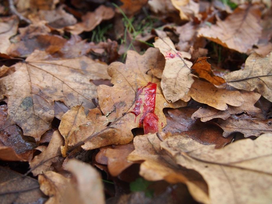 La forêt va voir rouge...