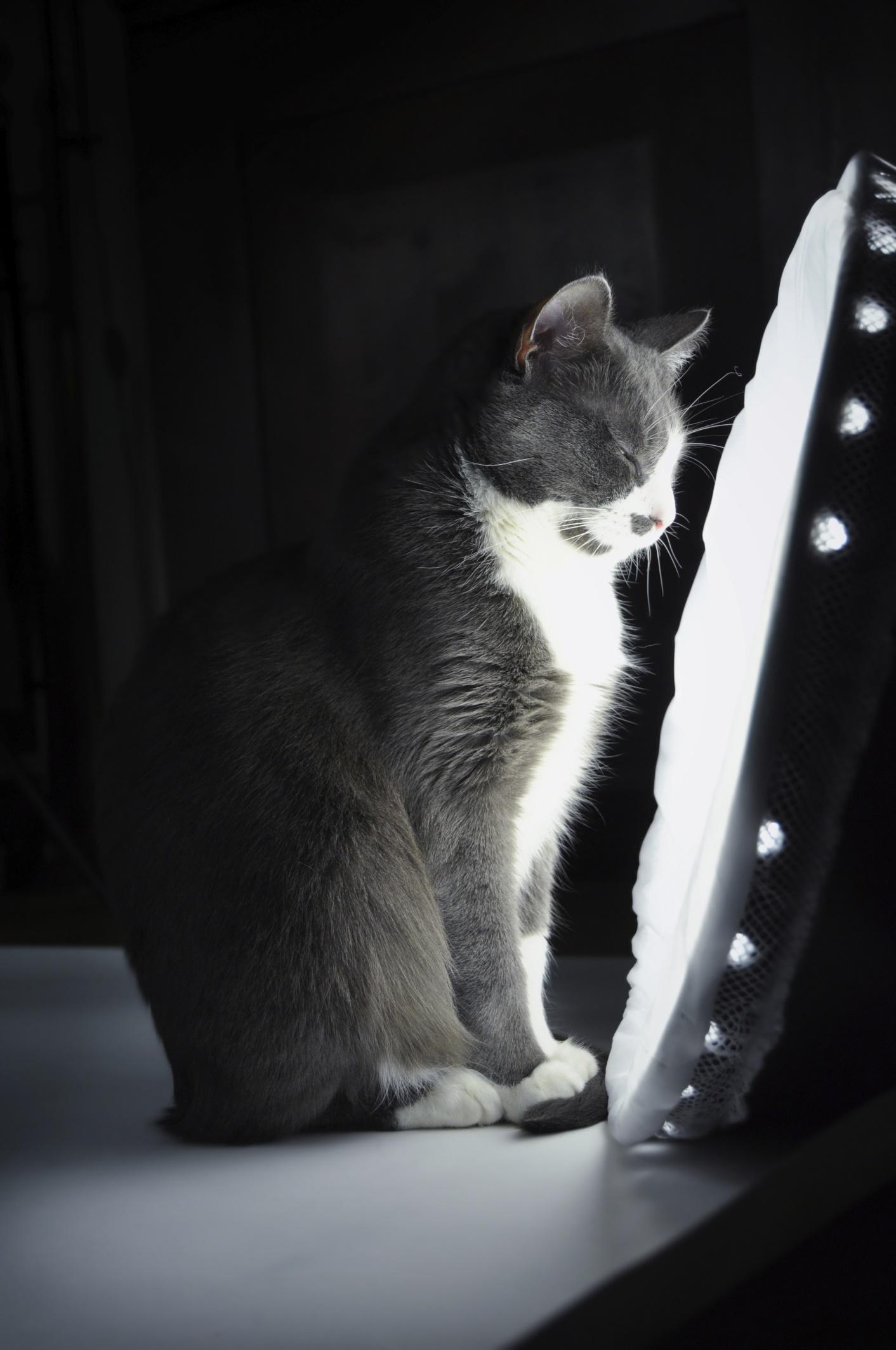 Les appareils de luminothérapie : tout le monde apprécie.