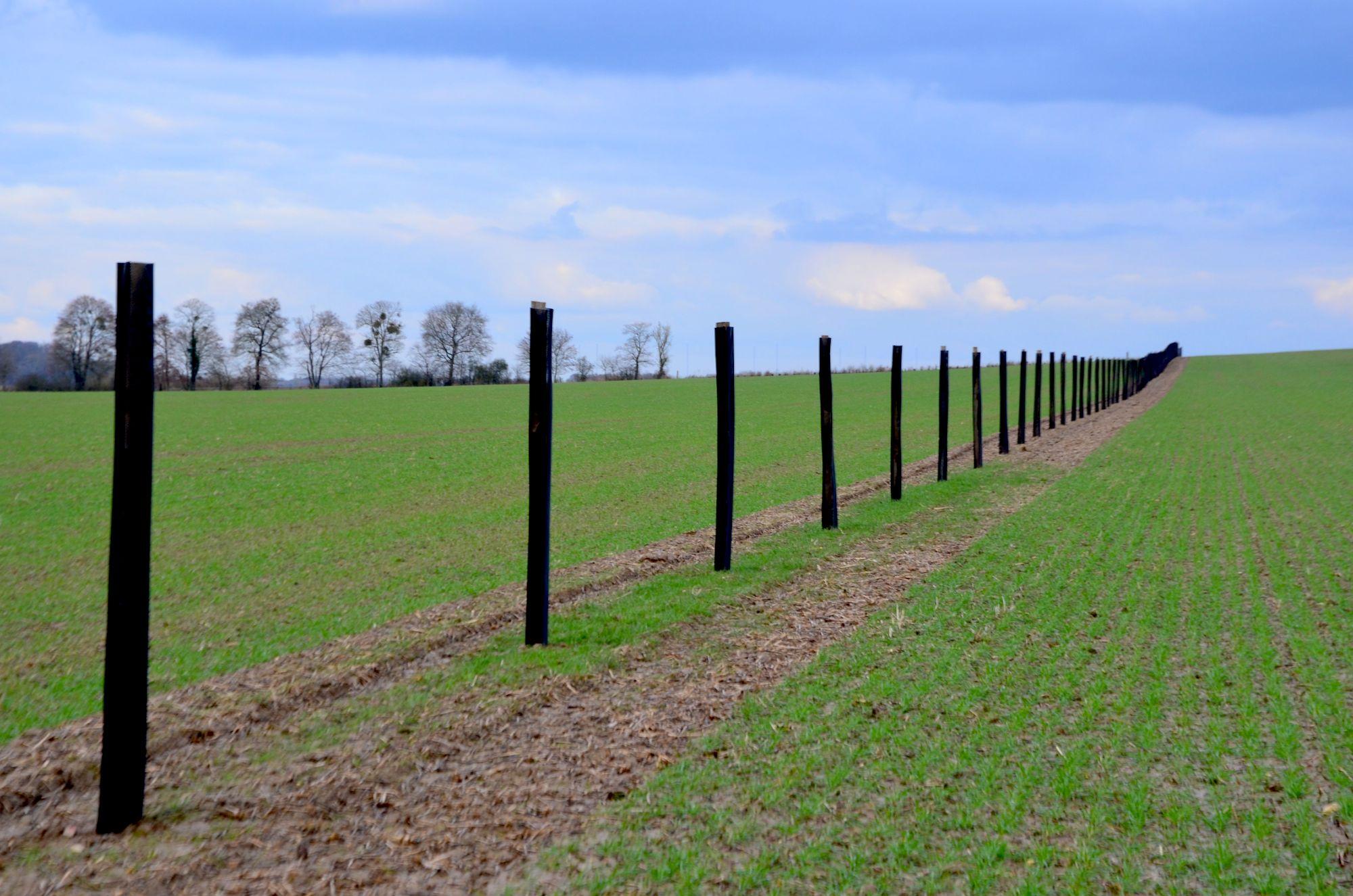 Planter des arbres au milieu des champs, l'agroforesterie est en marche.