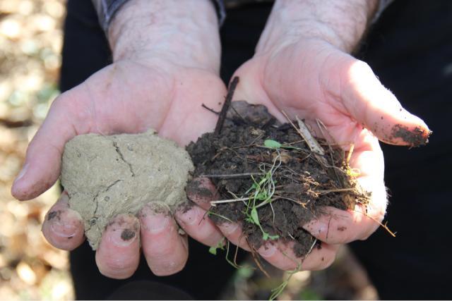 """À gauche, un sol complètement """"lessivé"""" ; à droite, un sol vivant chargé d'humus."""