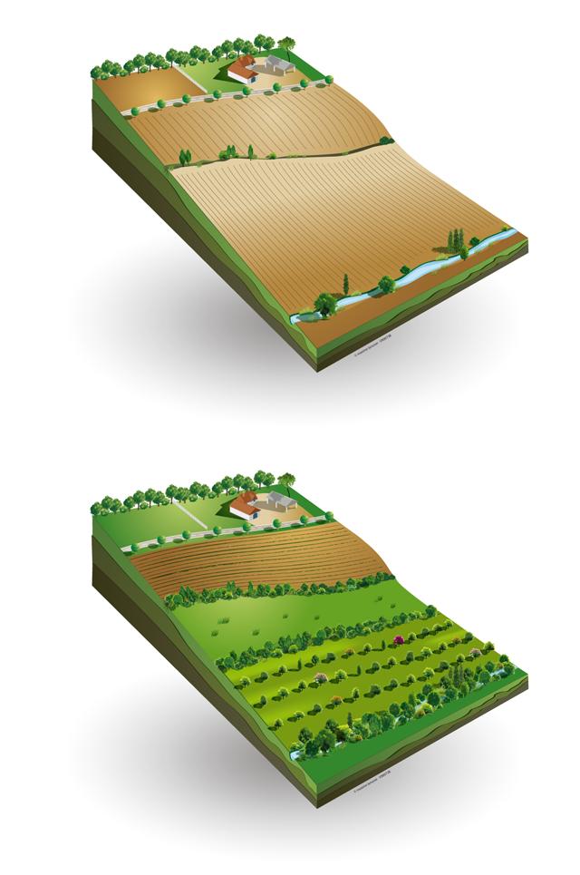 En haut, une parcelle en agriculture classique. En bas, une parcelle en agroforesterie.