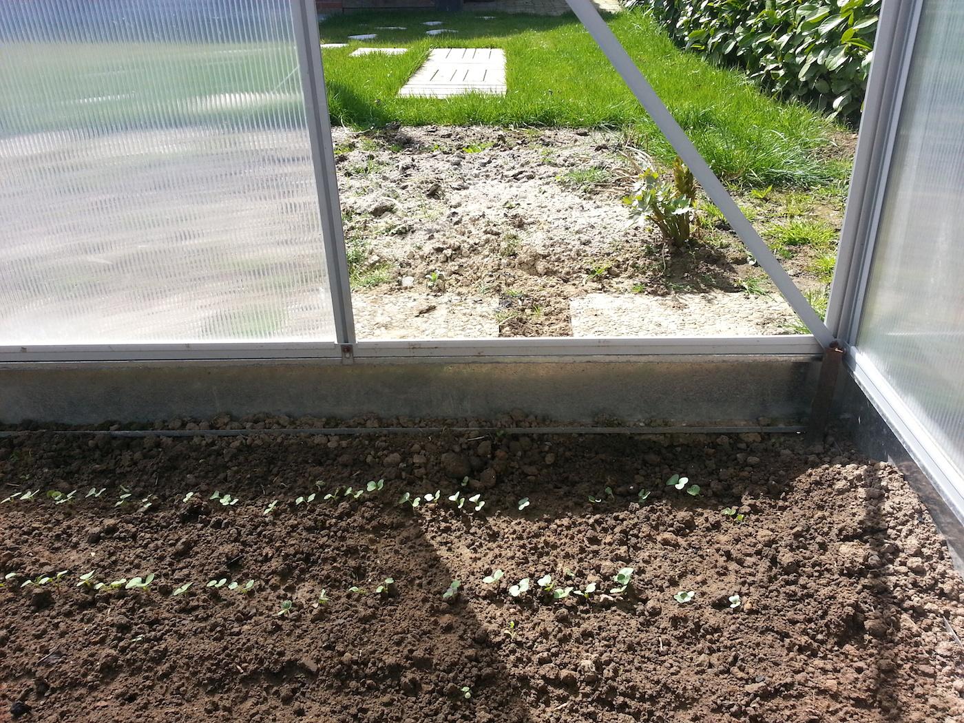 Recyclage au jardin les astuces de tonton eric oui for Cendres dans le jardin