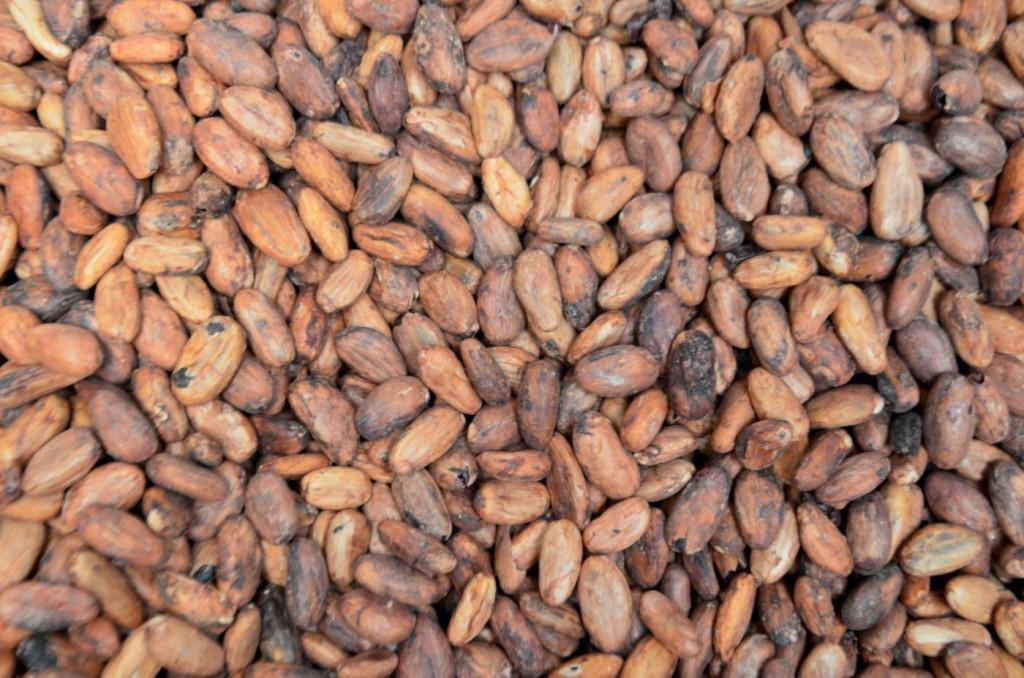 Acheter des fèves brutes directement aux coopératives permet de s'affranchir des dérives du négoce de cacao traditionnel.
