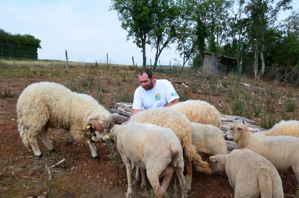 Les moutons viennent aider à l'entretien des parcelles. Et puis il faut dire que Frédéric en rêvait aussi...