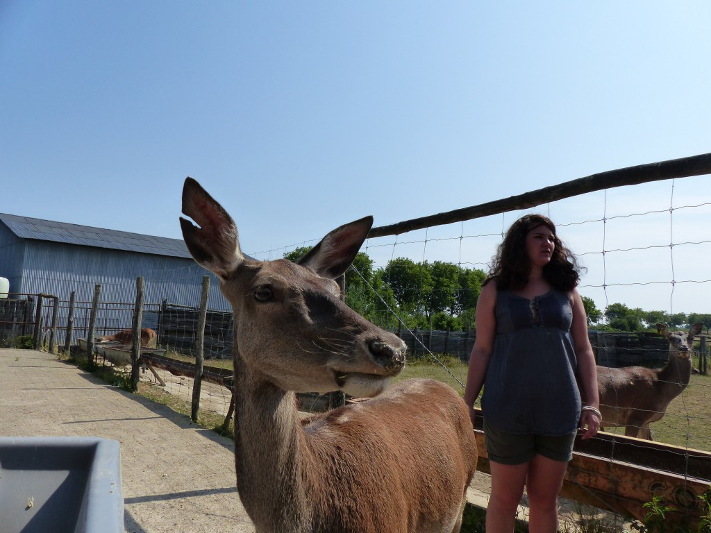 Bambi, biche décontractée.