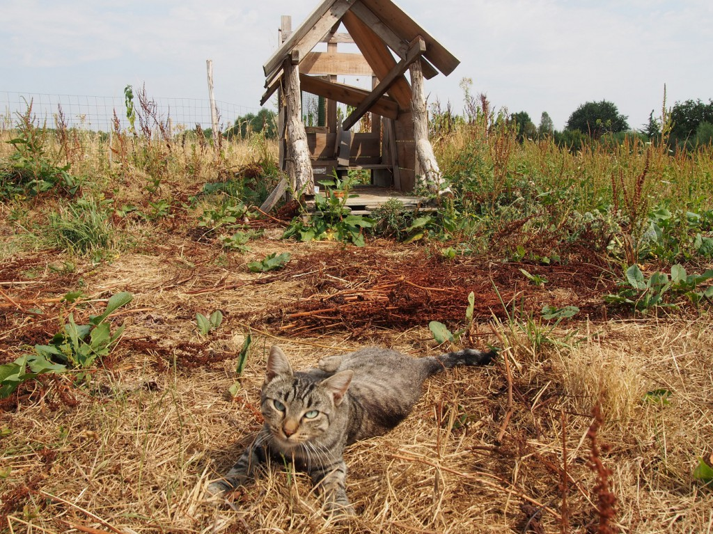 """Jérôme loge un chat sur la ferme, en espérant qu'il éloigne les mulots. """"Il préfère les caresses et la sieste"""", reconnait-il plein de dépit."""