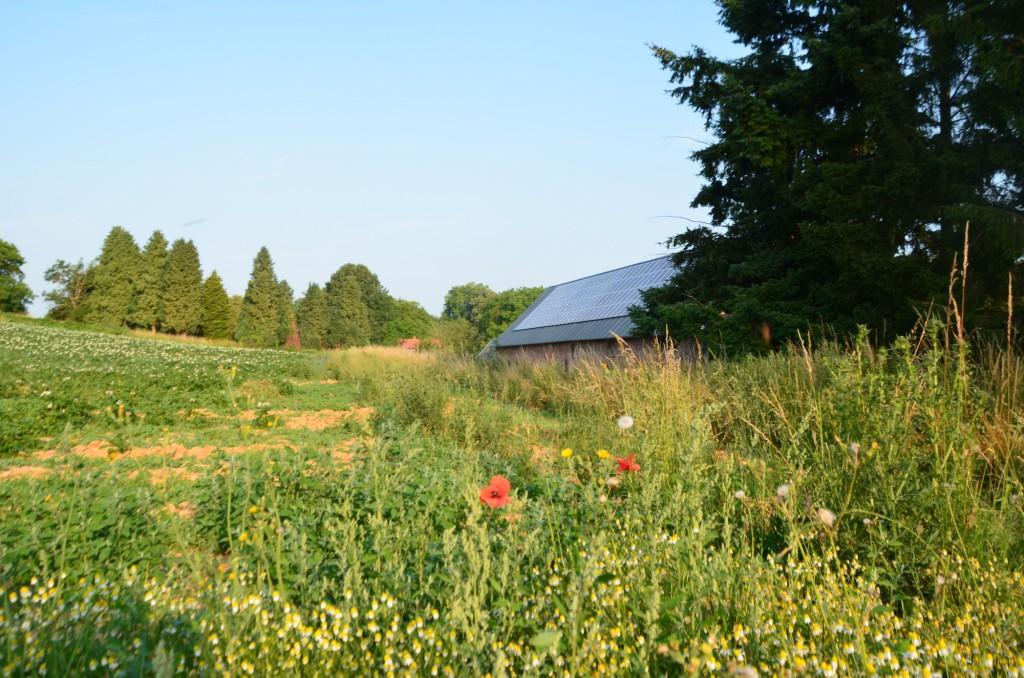 Nicolas cultive 124 hectares dont 10 en maraîchage bio. Les céréales ? Il les convertit en bio au fil des ans.