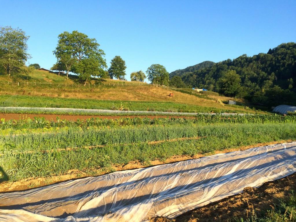 Près de 5 hectares organisés à la fois pour la culture de semences potagères, de légumes et de fruits frais et transformés, mais aussi comme ferme pédagogique pour des animations autour de l'agroécologie.