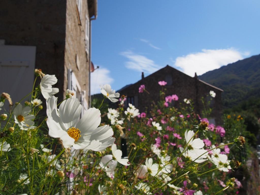 Le village de Cozzano, dans les montagnes corses.
