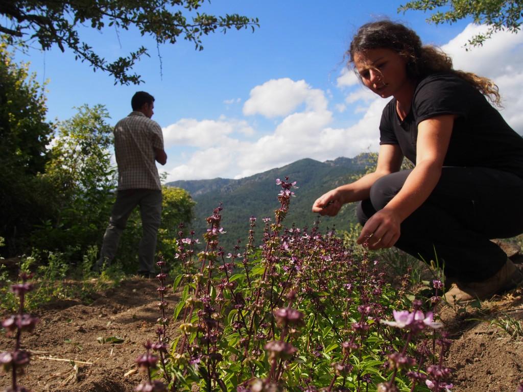 Maria se passionne pour les plantes aromatiques.