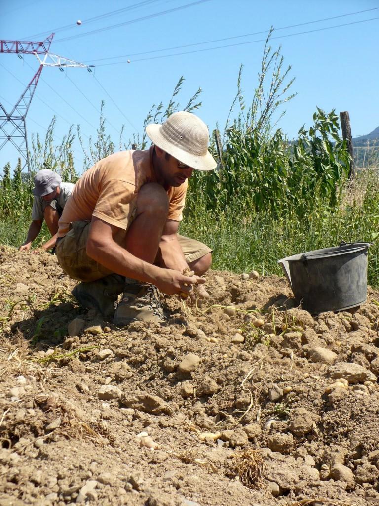Leur credo ? Libérer du temps pour réfléchir au métier de paysan.