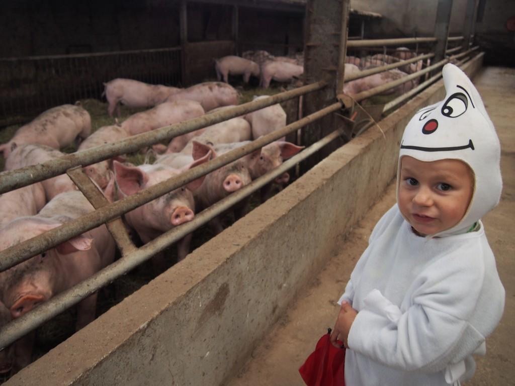 Les porcs n'ont pas peur des fantômes non plus. C'est qu'ils manquent d'imagination.