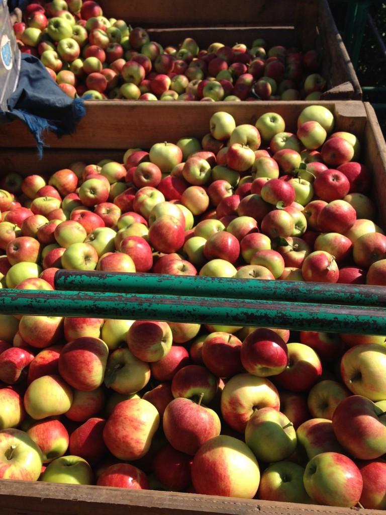 4 pommes 2