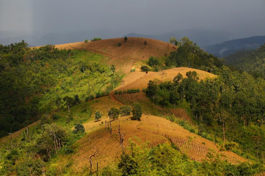 60% de la déforestation trouve son origine directement dans notre consommation d'aliments carnés. On dé-foreste pour planter les cultures qui nourrissent le bétail. © Christian Lamontagne / Pur Projet
