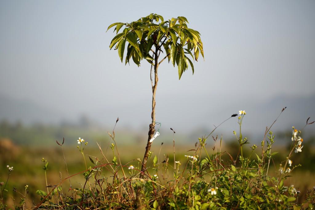 Pur Projet vend de l'air, pas du vent. Chaque arbre est fiché et fait l'objet d'un suivi personnalisé. Toutes les données sont collectées et analysées. «Cela nous permet de mesurer scientifiquement le taux de CO2 absorbé et d'identifier les pratiques agricoles écologiques les plus performantes.» © Christian Lamontagne / Pur Projet