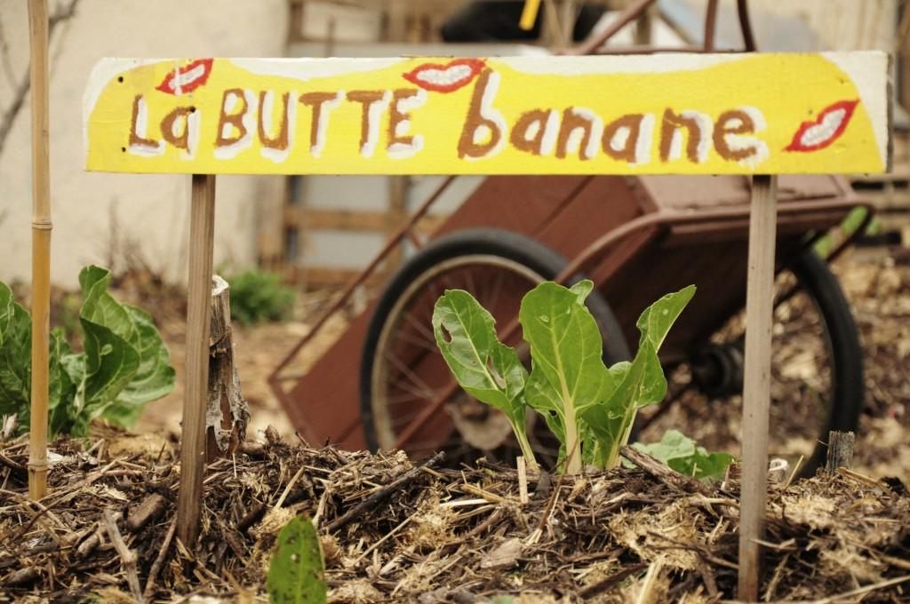 PicsArt_butte banane