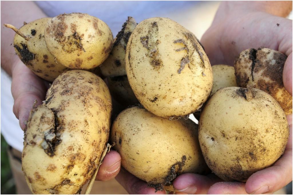 tajine pommes de terre du jardin