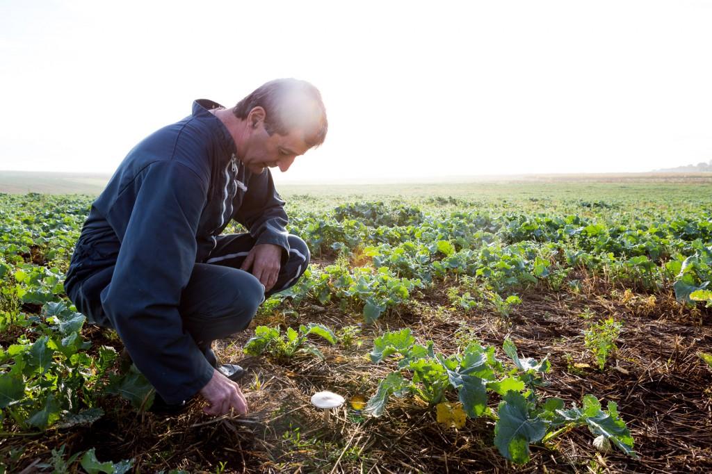 Jacky contemple un champignon qui a poussé dans son champ de colza. Ca veut dire qu'il y a de la vie. © Thomas Louapre