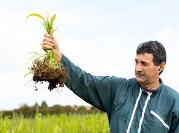 Jacky Berland tient dans sa main une motte de terre composée de repousse de blé et de sorgho qui a poussé sur le paillage du champ. © Thomas Louapre