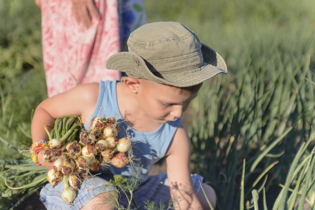 Young Boy Harvesting Green Onions at the Farm